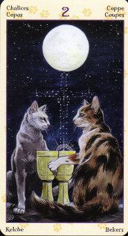 pagan-cats-08685