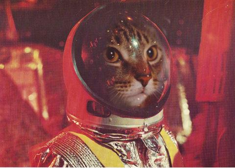 Cat Astroanaut