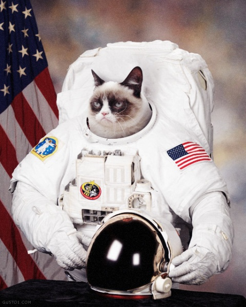 Cat Astroanaut